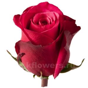 Где купить свежесрезанные розы служба доставки цветов по г талнах номер телефона