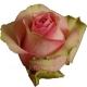 роза Белла Роза