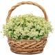 Корзина цветов 38