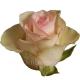 роза Федора