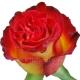 роза Хай Сосаети