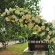 Свадебная арка 26