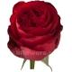 роза пионовидная Ред Элеганс