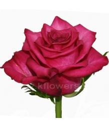 роза_Sanaa