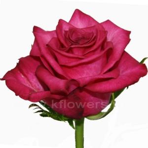 роза Сана
