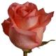 роза Светлана