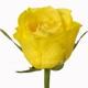 роза Топсан