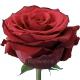 роза Апер Класс