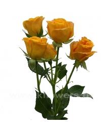 rose_Abeba