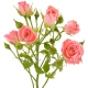роза Nathalie