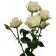 кустовая роза Сноу Флэйк