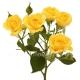 кустовая роза Беби жёлтая