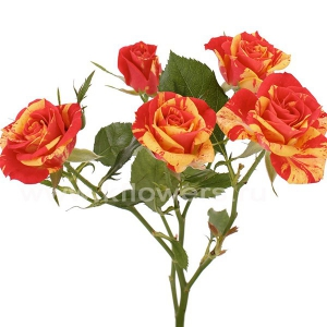 кустовая роза Файр Флэш