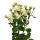 кустовая роза Олеся