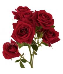 rose Rubicon
