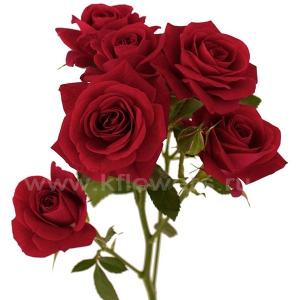 кустовая роза Рубикон