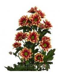 хризантема кустовая_Timman yellow