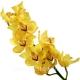 орхидея_Cymbidium