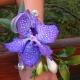Браслет из цветов 20