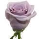роза Ошн Сонг