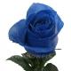 роза Вендела синяя
