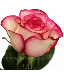 rose_Carousel