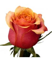 rose_Cherry Brandy