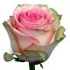 роза Эсперанс