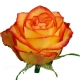rose_High Magic