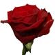 роза Леди Киллер