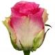 роза Малибу