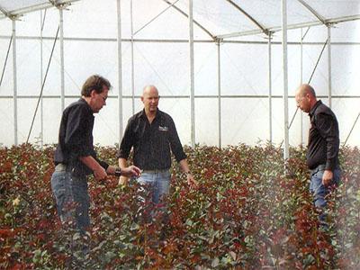 Процессом выращивания руководят голландские агрономы