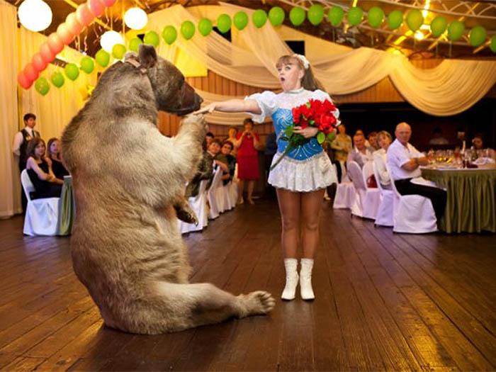 Цирковые номера и потрясающая программа для праздников