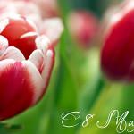 Выбрать цветы к весеннему празднику — советы мужчинам