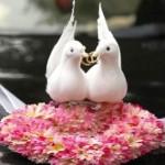 Содружество ведущих и диджеев – отличный вариант для организации свадьбы