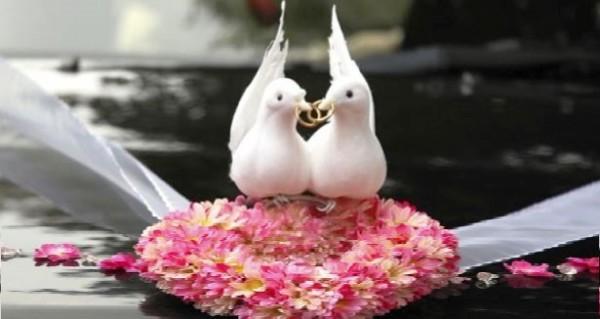 Организация и проведение свадеб от СДиВ