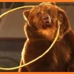 Выездной театр Карнавал Животных – гвоздь программы свадебного шоу