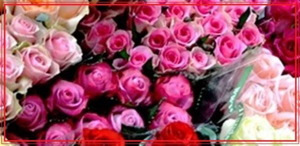 Производитель кенийских роз - компания Red Lands Roses