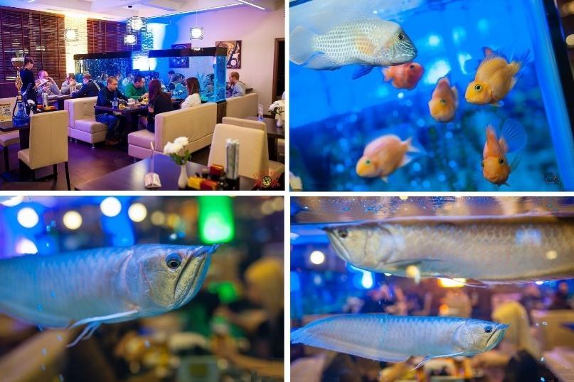Неоспоримый приоритет ресторана - аквариум с экзотическими видами рыб и подсветкой