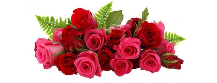 Розы из эквадора купить подарок жене на 25 лет